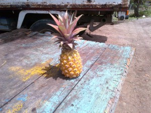 Local Sweet PineApple