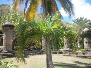 Nelson Dockyard Palm Tree